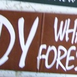 Bumper Sticker: Daddy What Were Forests Like?